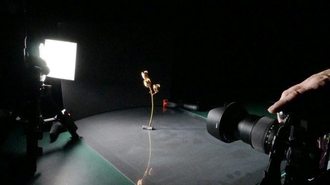 Setup Trockenblume